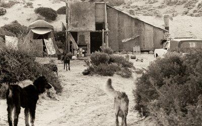 Cactus Beach and Witzig's War